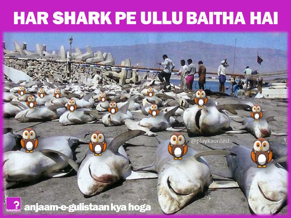 shark-ullu2