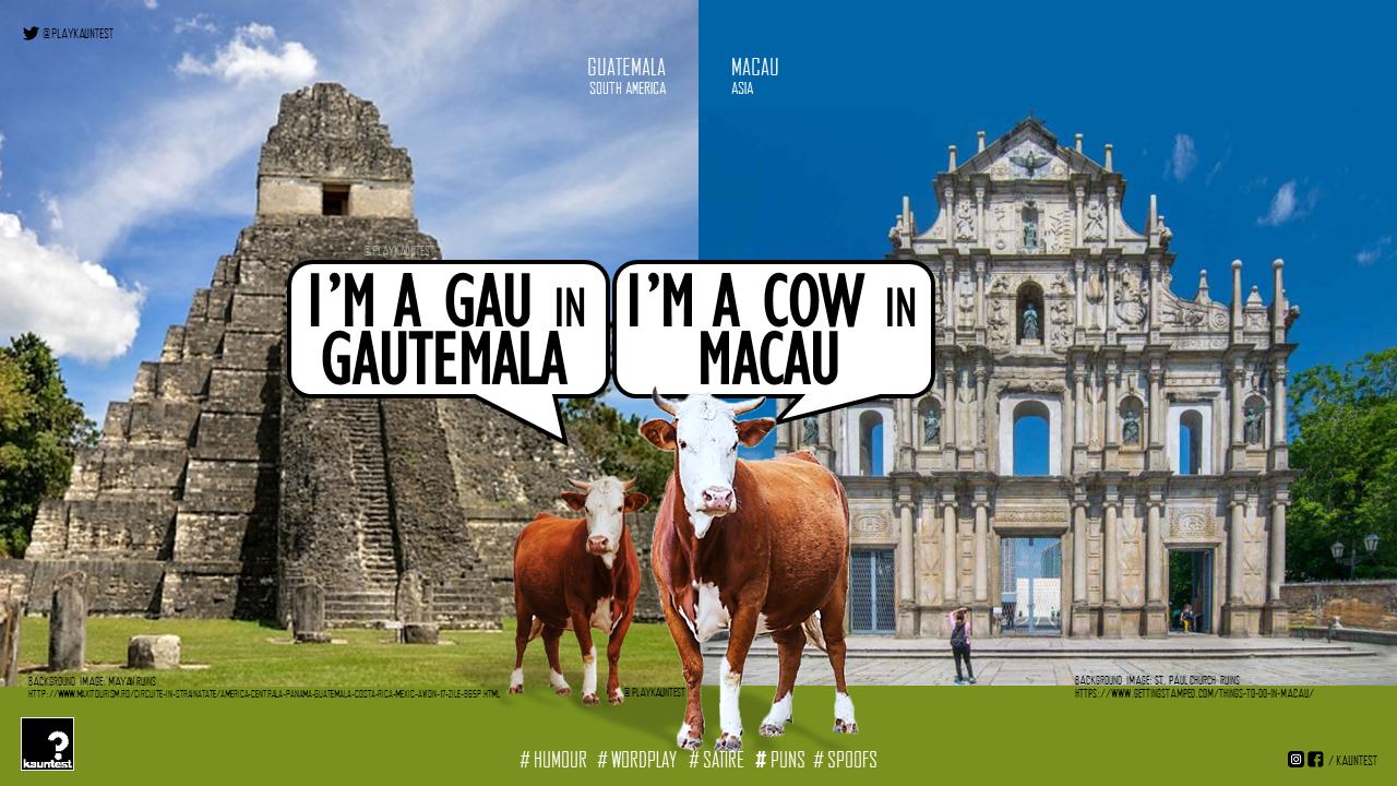 Silly wordplay cows – KAUNTEST